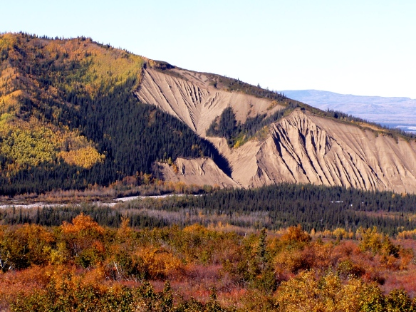 Dry Creek, Alaska. You can just make out the roof of our cabin in the spruce trees below that gravel bluff.