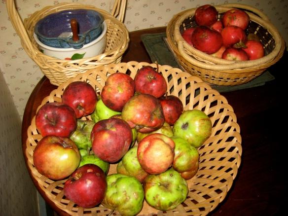 Organic Homegrown Apples