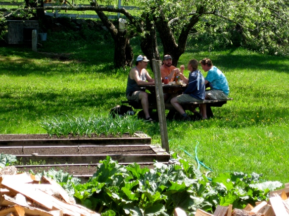 Four friends enjoy a late lunch at the picnic table Andy built for my birthday, beneath the shade of our old apple tree.